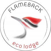Luxury glamping experience at Flameback eco-lodge Sri-lanka