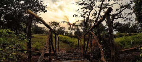 Forest Hills At Tala