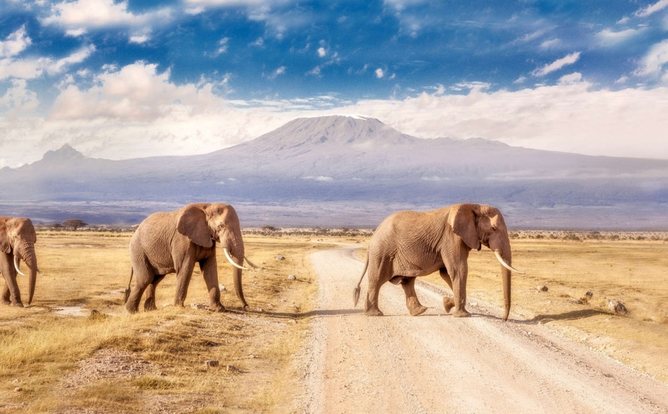 Kenya Holiday Package
