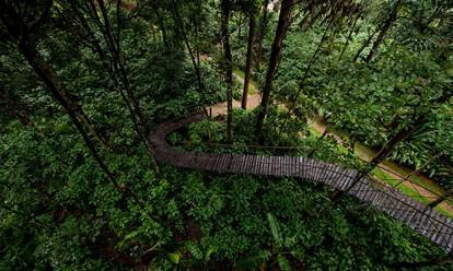 Pepper Trail
